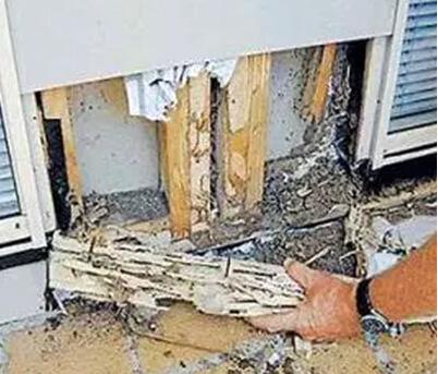 building-pest-inspection